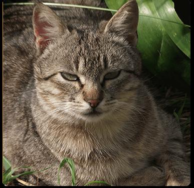 animal-walfare-1